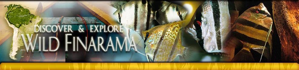 Discover & Explore Wild Finarama